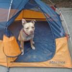 Nala camping!