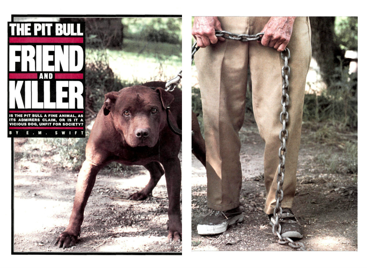 The History Of Pit Bulls Love A Bull