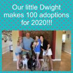 Dwight Love-A-Bull 100 Adoptions