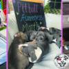 National Pit Bull Awareness Month Love-A-Bull