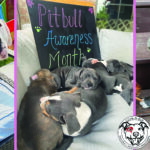 National Pit Bull Awareness Month Love-A-Bull