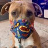 The Truth About Rescuing Dogs Pandemic Love-A-Bull