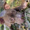 Love-A-Bull Love Story Diego